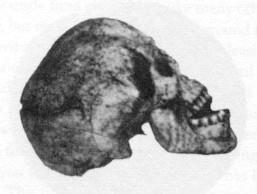 skull1.jpg (14467 bytes)